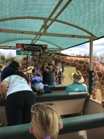 Giraffe on African Safari Tour