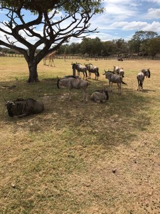 animals on african safari